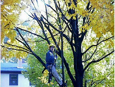 tree pruning lawrenceville