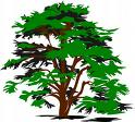 Tree Service Lawrenceville